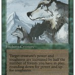 Aspect of Wolf – Revised